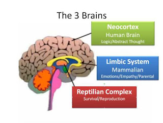 المراكز الأساسية في الدماغ