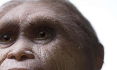Reconstruction of Homo floresiensis by Atelier Elisabeth Daynes. Credit: Kinez Riza.