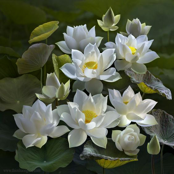 Biến rác thành hoa