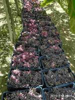 اربح 1000 ج يوميا من تجارة الخضروات و الفواكة 2021 | كل طرق الربح من تجارة الفواكة و الخضروات سواء بفتح محل خضار و فاكهة او التجارة من خلال شراء الفاكهة و الخضروات