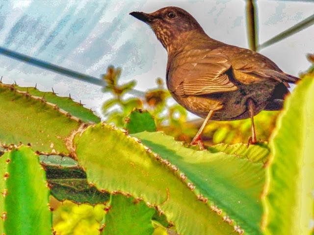 Bird in Mediterranean Biome at Eden Project, Cornwall