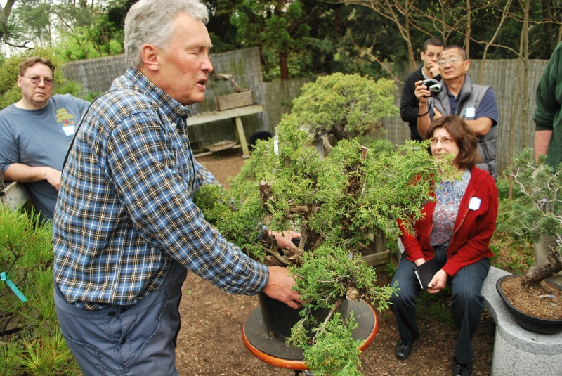 The Bonsai Society Of South Jersey Progressions Rocky Mountain Juniper 1