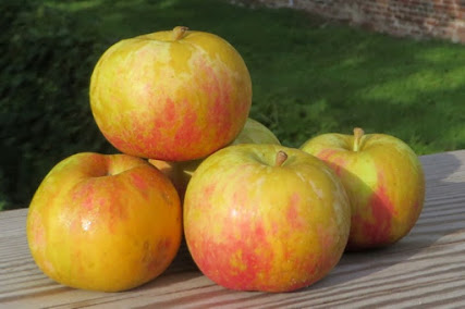 A pile of small piebald apples, red, olive, and russet colors