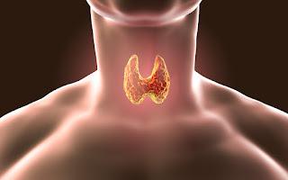 الغدة الدرقية داخل جسم الانسان