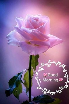 100+ New Good Morning Images With God and Goddess (2019
