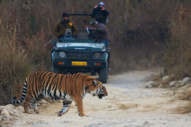 Jim Corbett jungle safari