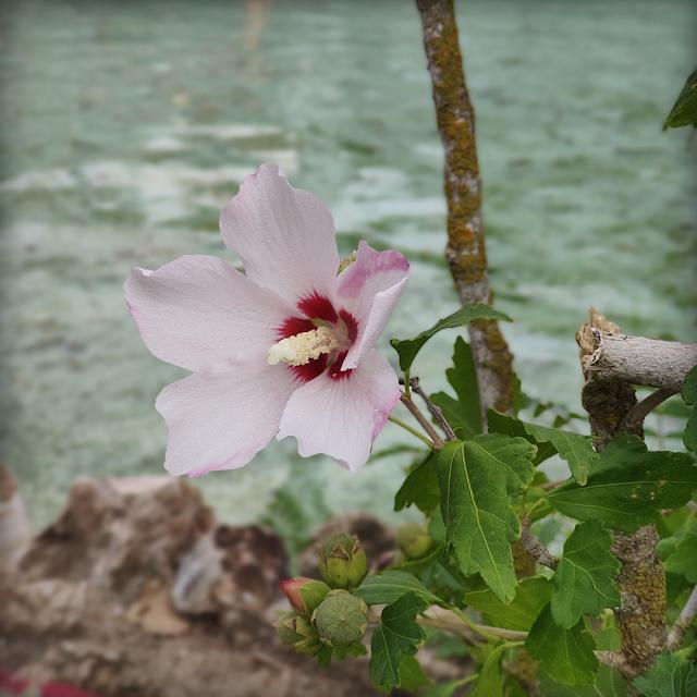 Foto flor parque atracciones Madirex