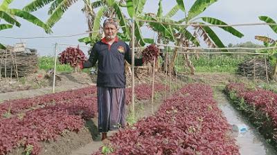 Perkuat Ekonomi Pancasila, Patriot Garuda Nusantara Tanam Bayam Merah