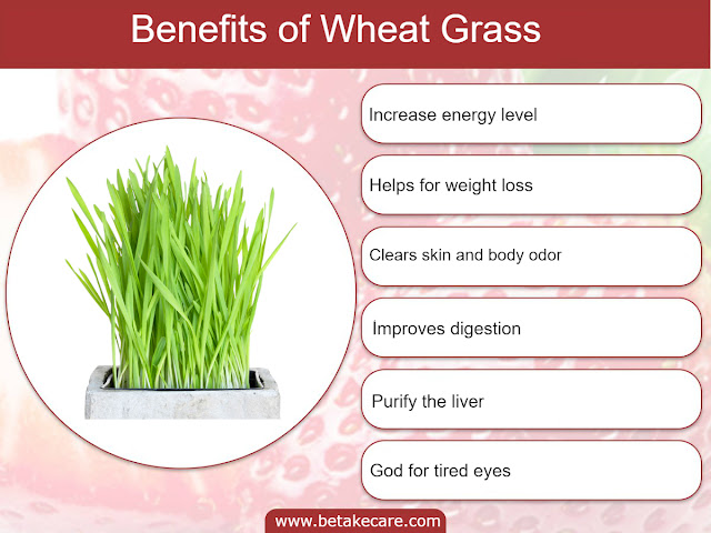 Benefits of Wheat Grass