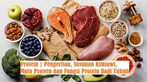 Protein | Pengertian, Susunan Kimiawi, Mutu Protein dan ...