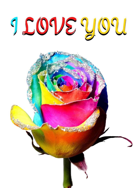 I Love You Rainbow Rose