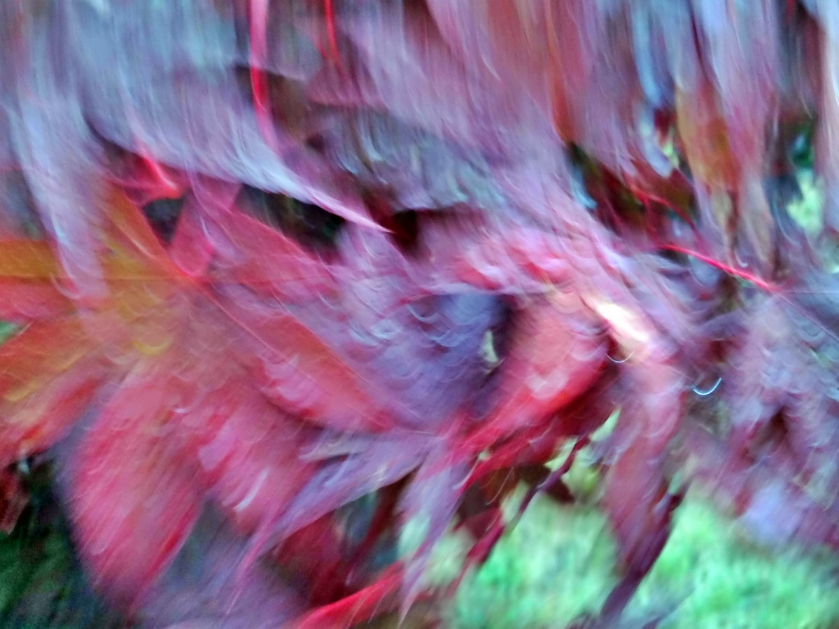 ICM: Intentional Camera Movement (2)