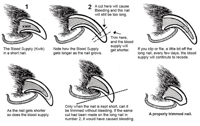 how to use dog nail clippers, how to use dog clippers, dog nail clippers how to use, how to do dog grooming