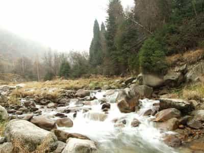 Es mejor conseguir agua de fuentes de rápido movimiento como este río.