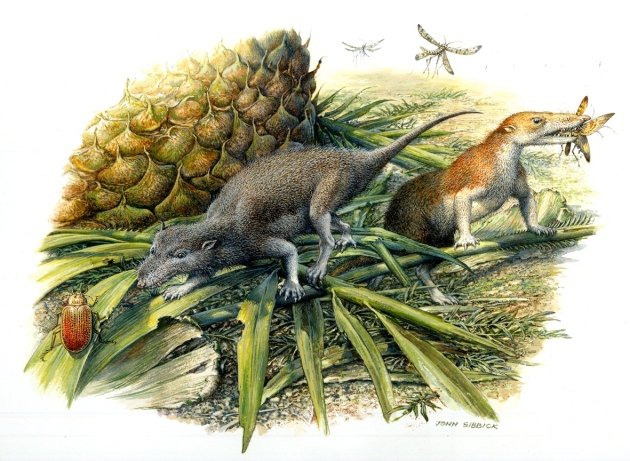 Ancient tiny teeth reveal first mammals lived more like reptiles