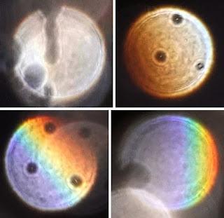 strange circles