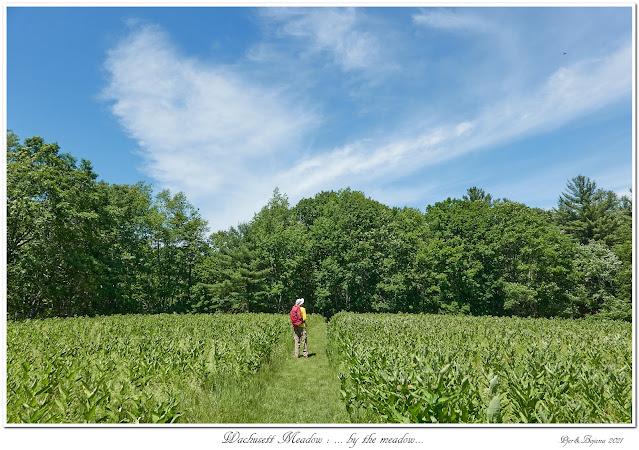 Wachusett Meadow: ... by the meadow...