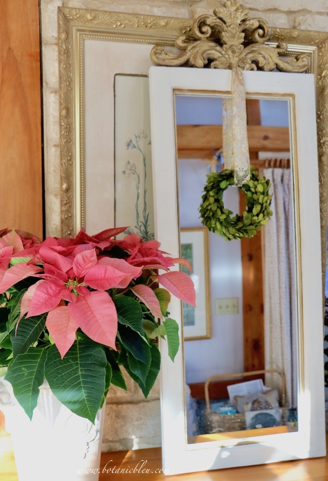 French country mirror decorated for Christmas is narrow enough for a large pink poinsettia to fit beside it