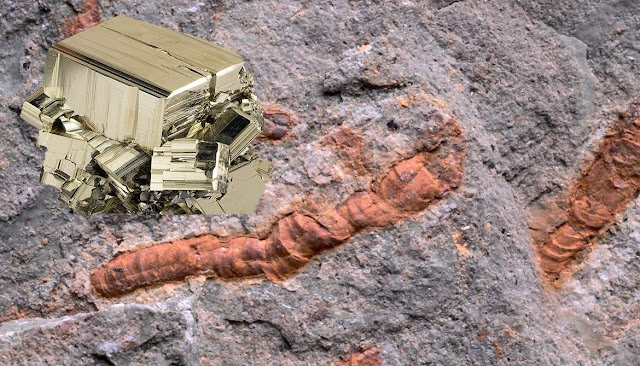 How 'Worms' End Up in Fool's Gold Fossils