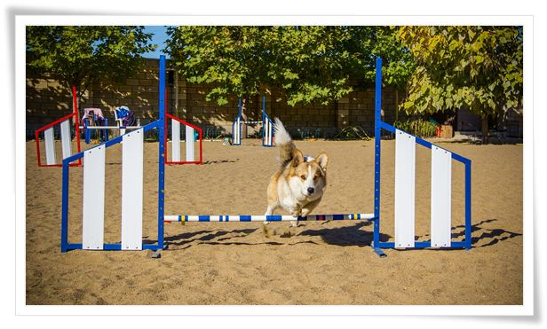 best dog training guides