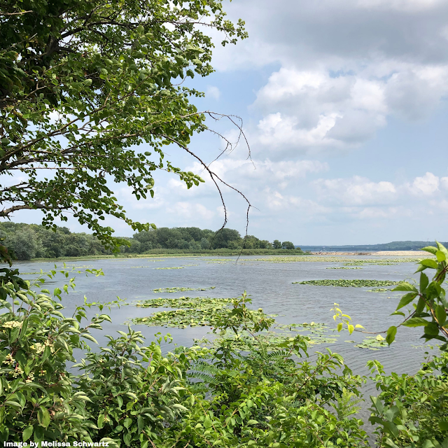 The Mississippi River at Smith's Island is a favorite spot for birds.