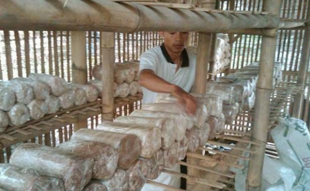 budidaya jamur tiram putih Untuk Pemula - baglog