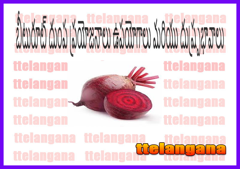 బీటురూట్ దుంప ప్రయోజనాలు ఉపయోగాలు మరియు దుష్ప్రభావాలు