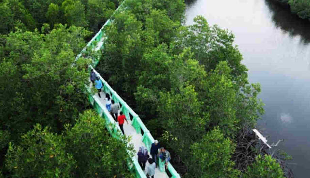 hutan bakau manggrove