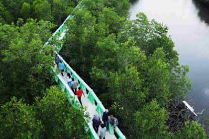 Menikmati Dekapan Bakau di Hutan Mangrove Kota Langsa