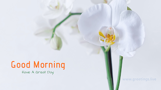 """good morning""  orchid flower image"