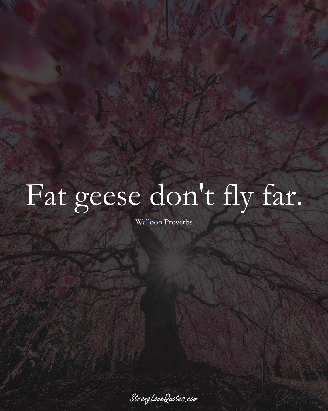 Fat geese don't fly far. (Walloon Sayings);  #aVarietyofCulturesSayings