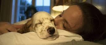 3 consejos efectivos para hacer que tu perro duerma en la noche