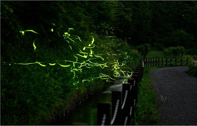 Tatsuno, Kota di Jepang yang Bermandikan Cahaya Kunang-kunang, naviri.org, Naviri Magazine, naviri majalah, naviri