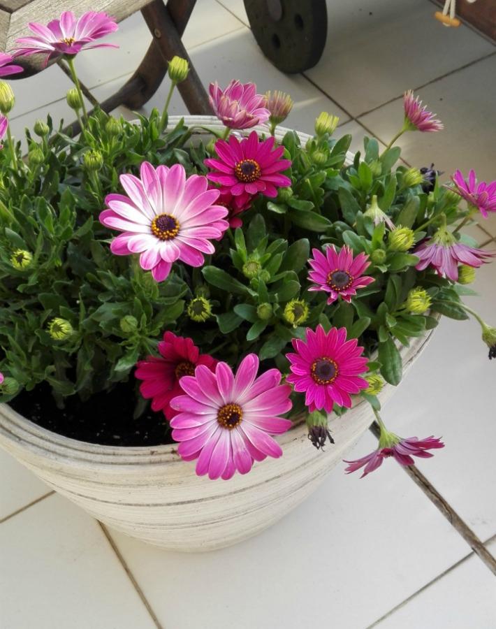 Consejos para plantar flor de temporada