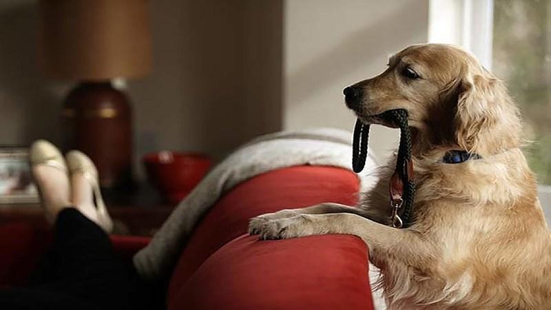 Όταν οι σκύλοι προσπαθούν να αποσπάσουν την προσοχή μας!!! (βίντεο)