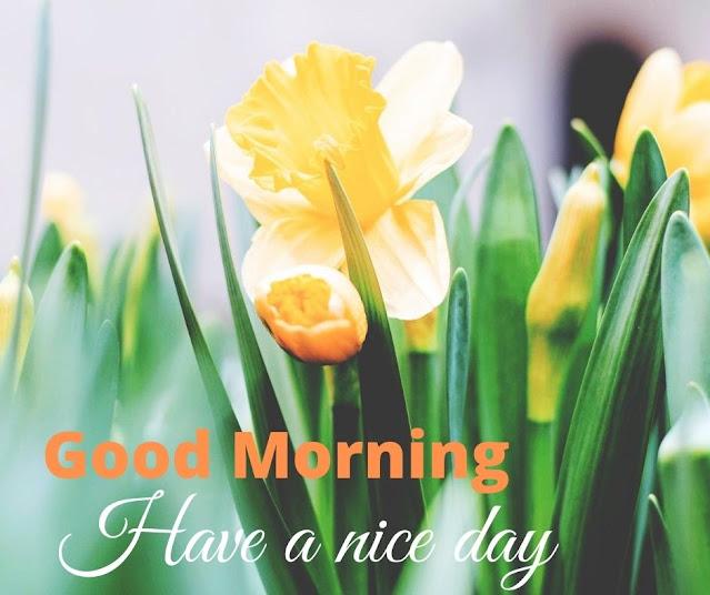 Attractive Good Morning Wish