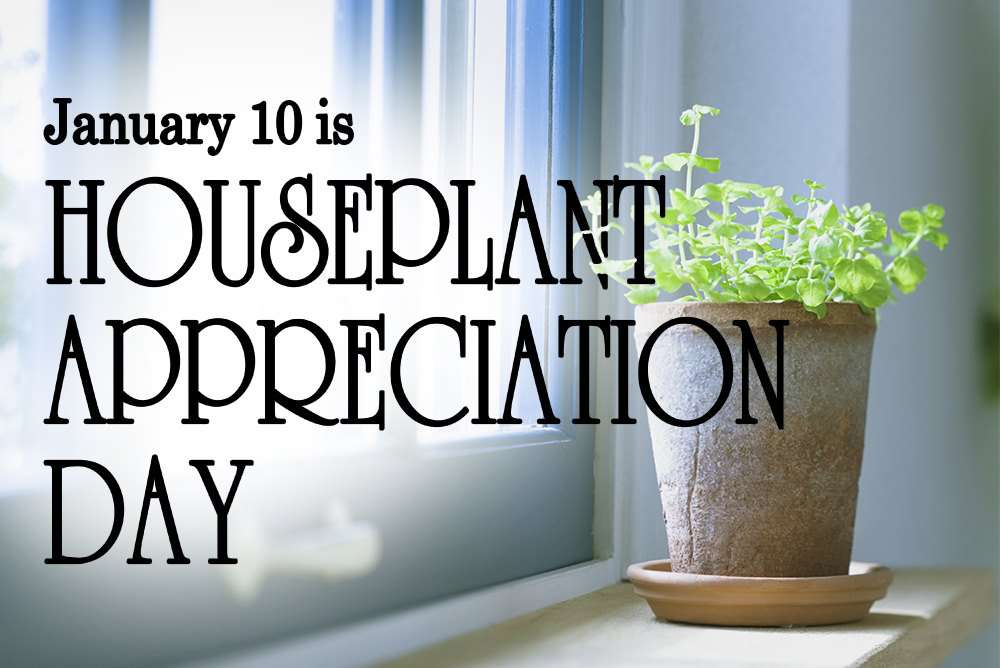 National Houseplant Appreciation Day Wishes Unique Image