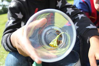 Just before we left, we collected some stripey caterpillars stared at them for a little while.