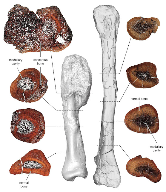 Rare malignant cancer diagnosed in a dinosaur