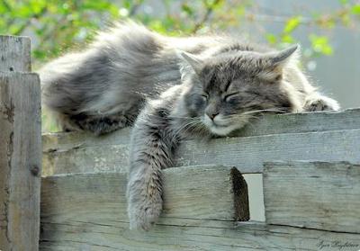 rüya-gören-kedi