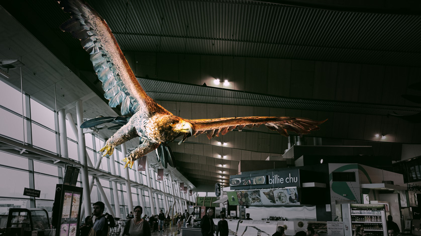 Eagle in Wellington Airport terminal, inspired by the Lord of the Rings.