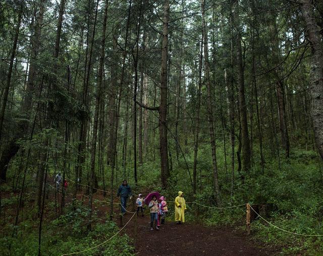 Để đến khu bảo tồn đom đóm Nanacamilpa, du khách sẽ đi qua đồng quê yên bình với các cánh đồng lúa mì, lúa mạch, đậu fava và ngô trải dài đến rìa rừng. Đi bộ sâu vào rừng, du khách sẽ nhìn thấy những cây thông, sồi và linh sam cao lớn cùng rất nhiều loài cỏ dại bao phủ mặt đất. Mùa này thường mưa rất nhiều và khiến cho cuộc đi bộ của du khách thêm khó khăn. Song đây là điều kiện thời tiết thích hợp nhất để gặp gỡ những con đom đóm.