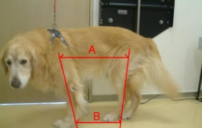 sintomas da displasia em cães