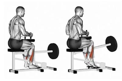 Calves Exercises - Machine seated calf raise