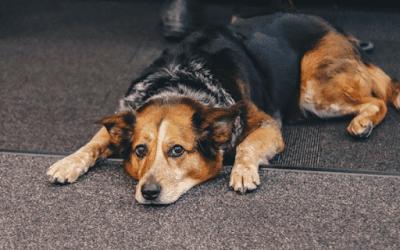 Dog lying silently on mat