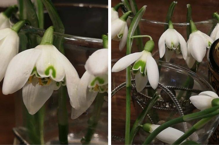 Frühjahrsblüher in der Vase