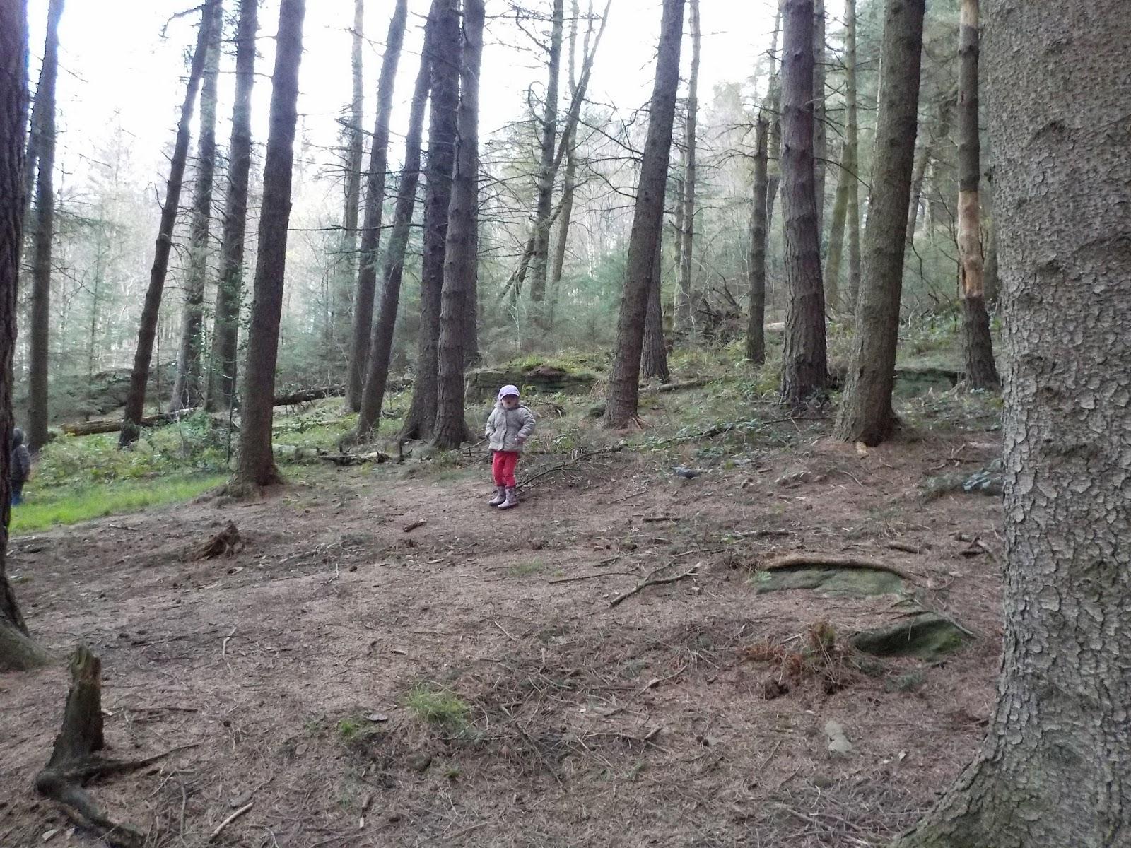 exploring woods