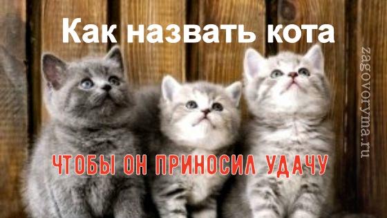 Как назвать кота, чтобы он приносил удачу