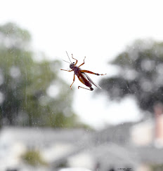 grasshopper on glass