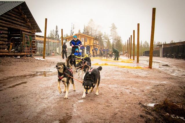 Bearhill husky-Slitte trainate dagli husky-Rovaniemi